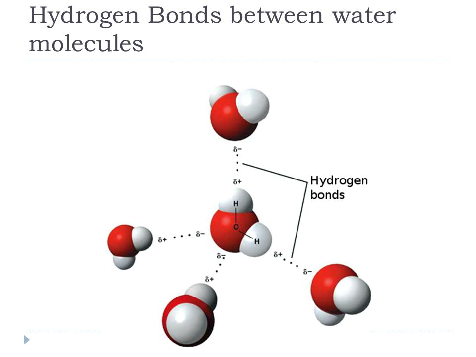 Hydrogen Bonds between water molecules