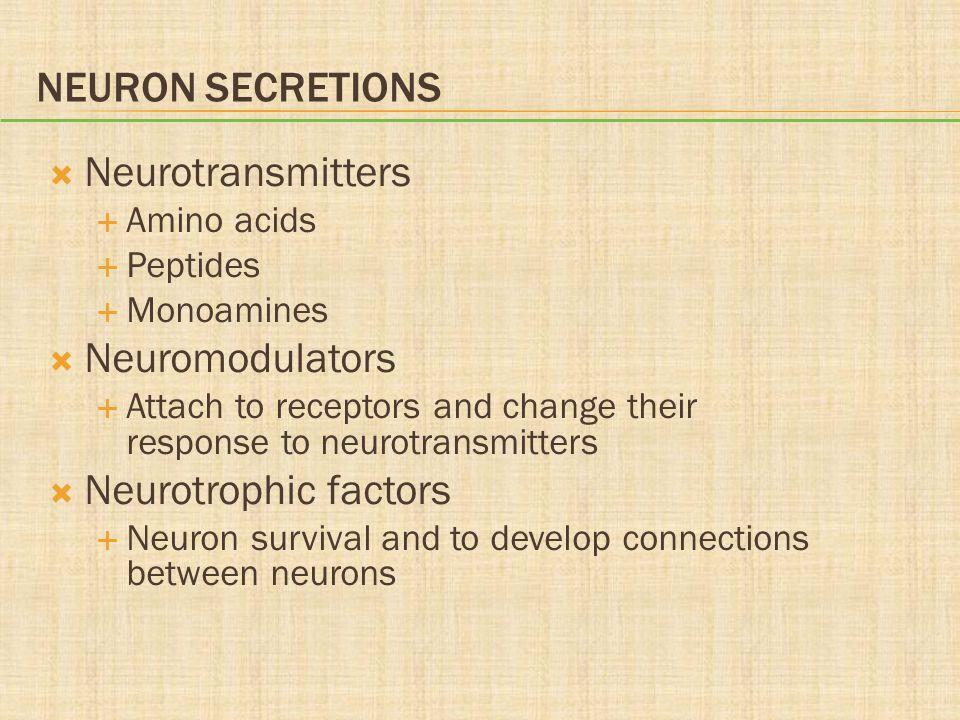 Neuron Secretions Neurotransmitters Neuromodulators