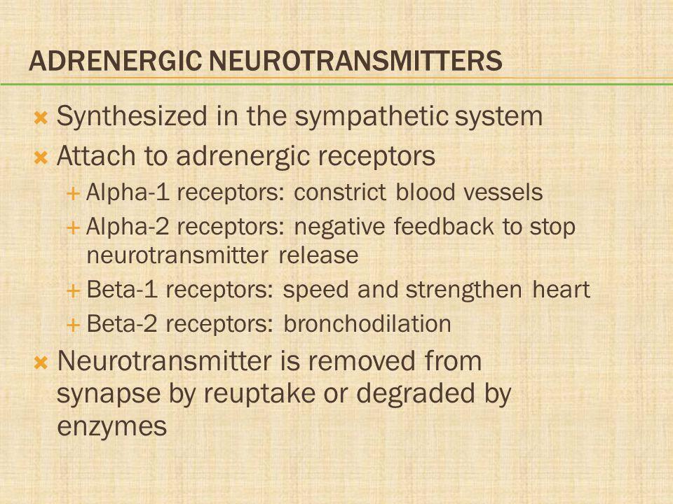 Adrenergic Neurotransmitters