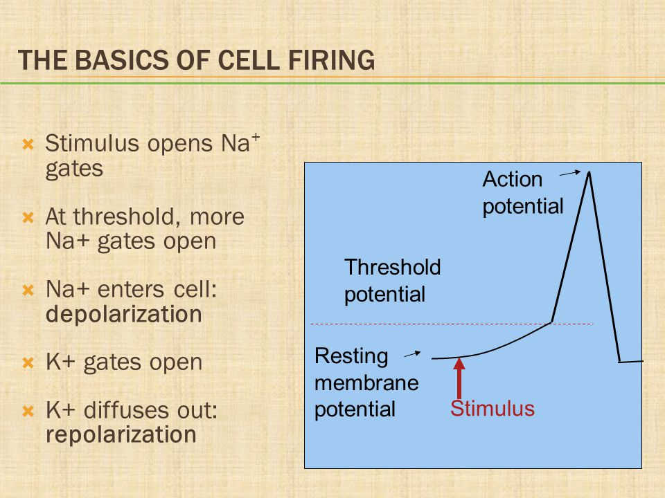 The Basics of Cell Firing