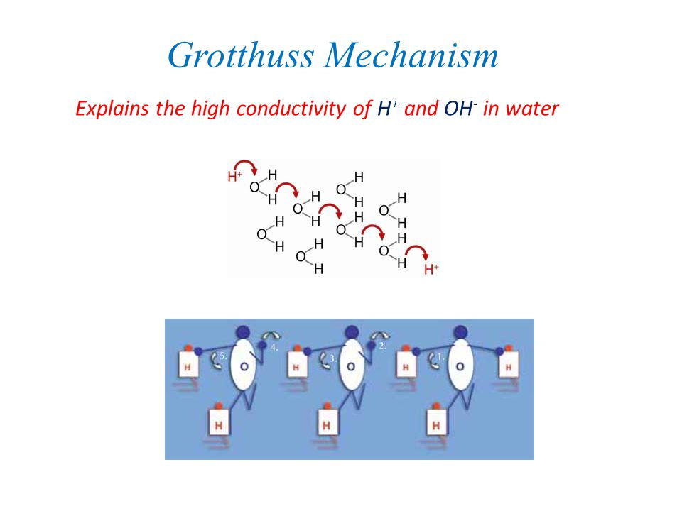 Grotthuss Mechanism Explains the high conductivity of H+ and OH- in water