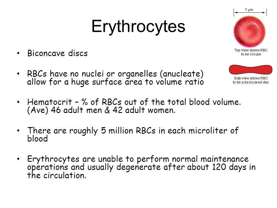 Erythrocytes Biconcave discs