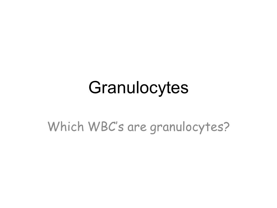 Which WBC's are granulocytes