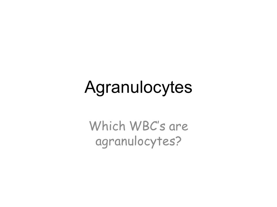Which WBC's are agranulocytes