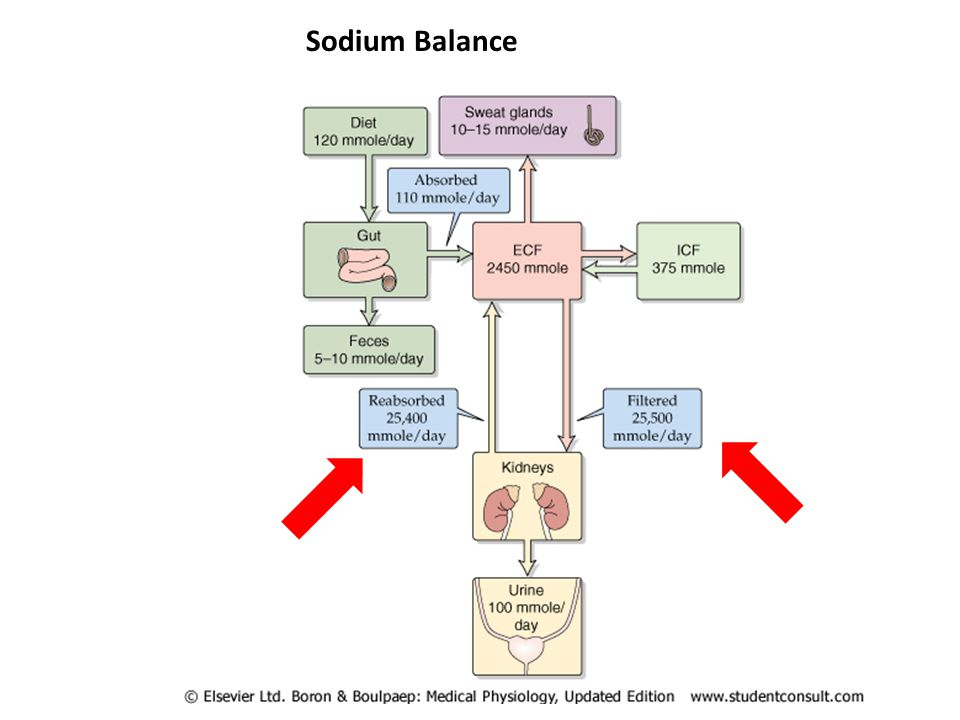 Sodium Balance This diagram shows how sodium is