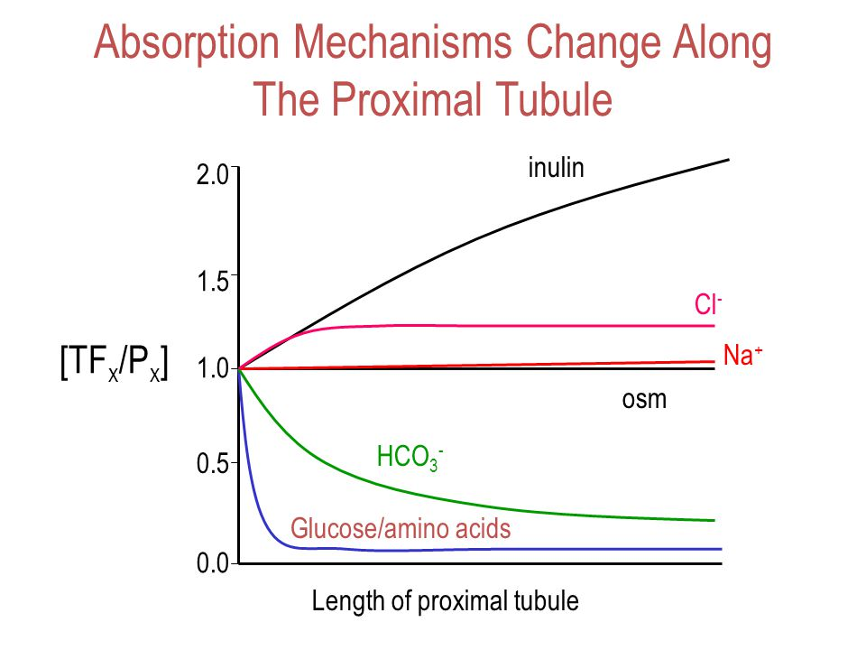 Absorption Mechanisms Change Along The Proximal Tubule