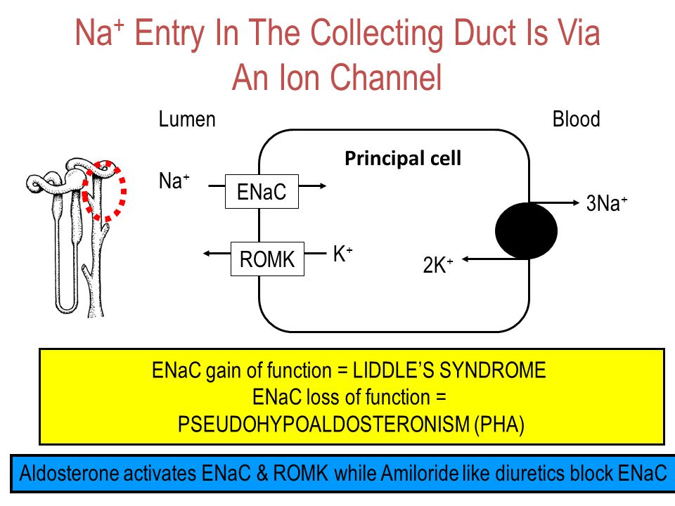Na+ Entry In The Collecting Duct Is Via An Ion Channel