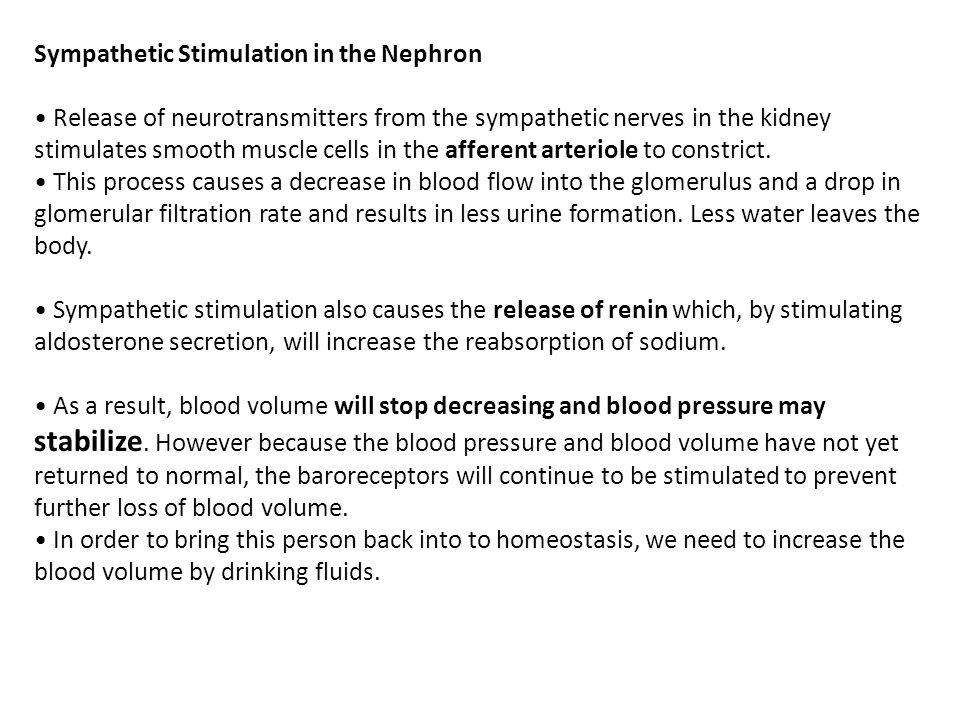 Sympathetic Stimulation in the Nephron