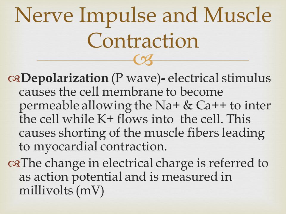 Nerve Impulse and Muscle Contraction