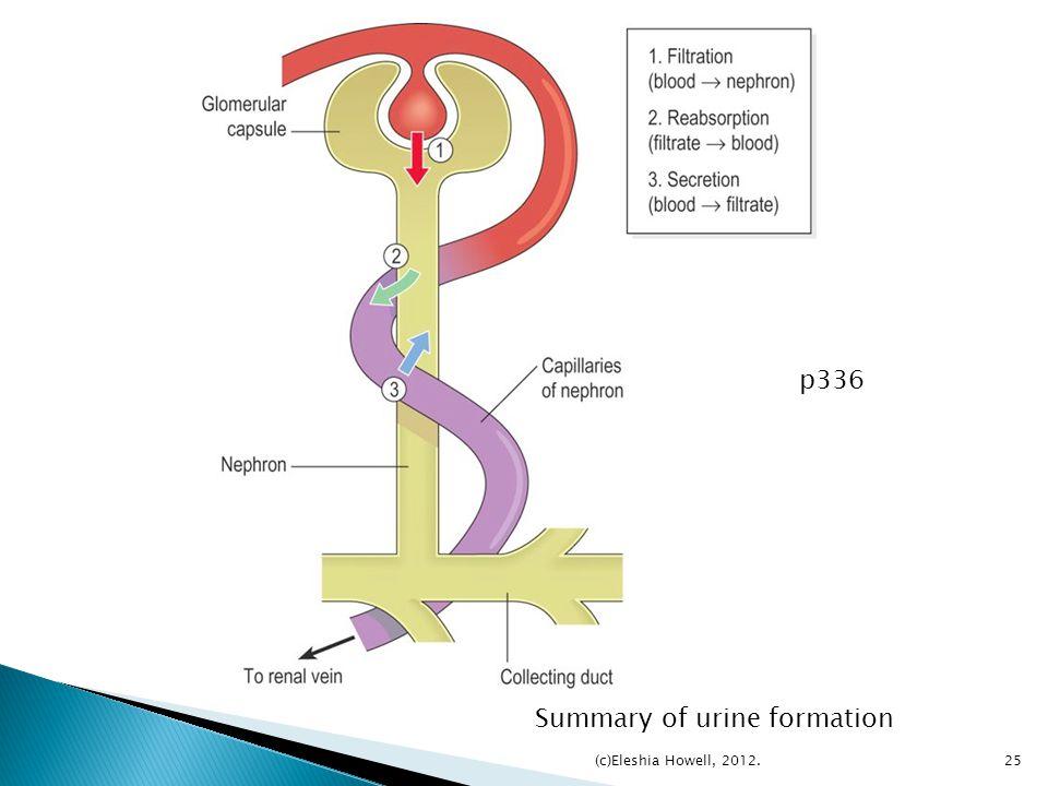 Summary of urine formation