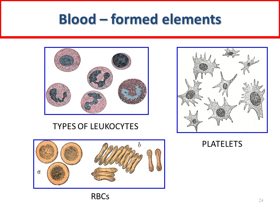 Blood – formed elements