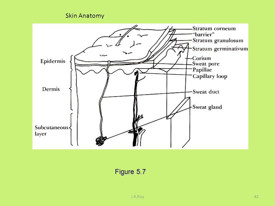Skin Anatomy Figure 5.7 J.K.Roy