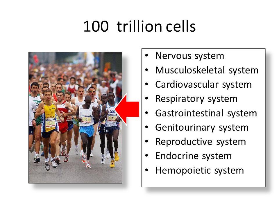 100 trillion cells Nervous system Musculoskeletal system
