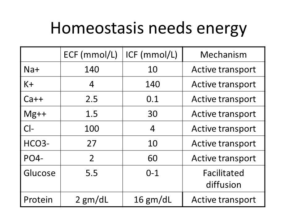 Homeostasis needs energy
