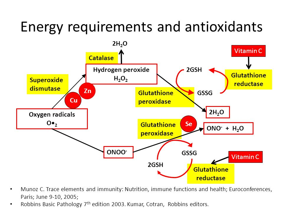 Energy requirements and antioxidants