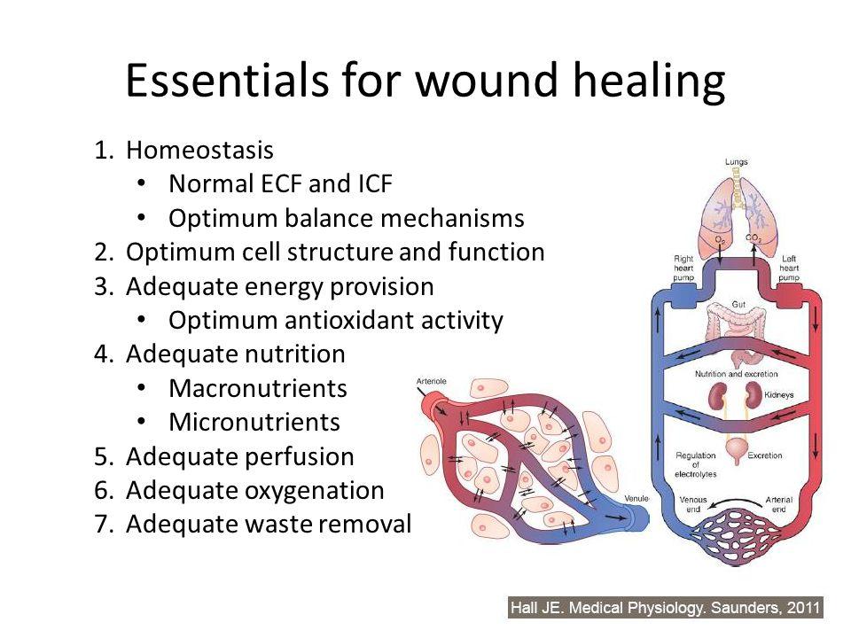 Essentials for wound healing