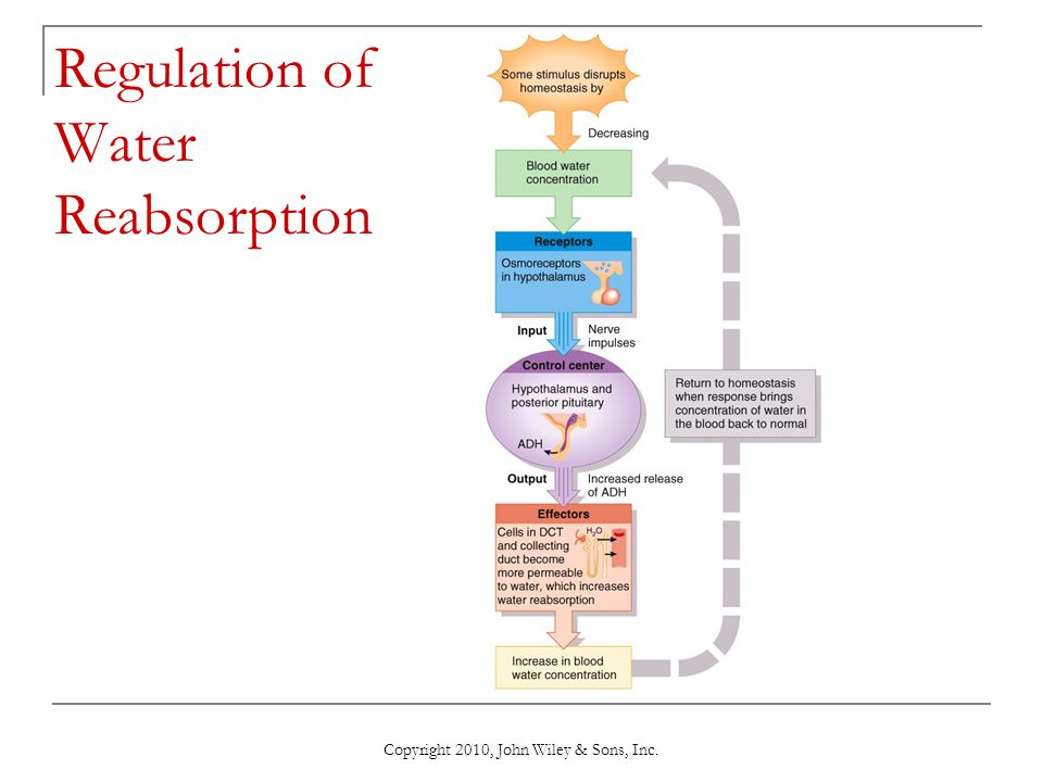 Regulation of Water Reabsorption