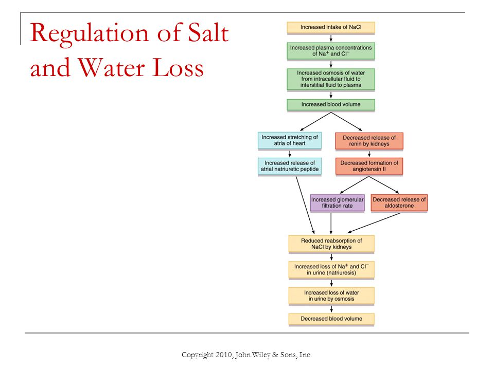 Regulation of Salt and Water Loss