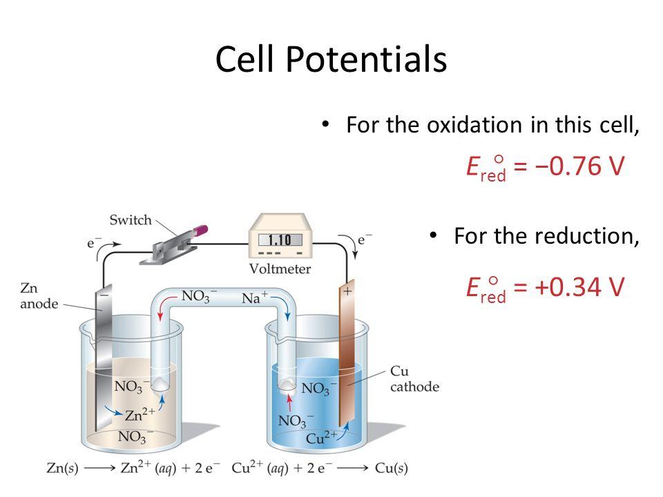 Cell Potentials Ered = −0.76 V  Ered = +0.34 V 