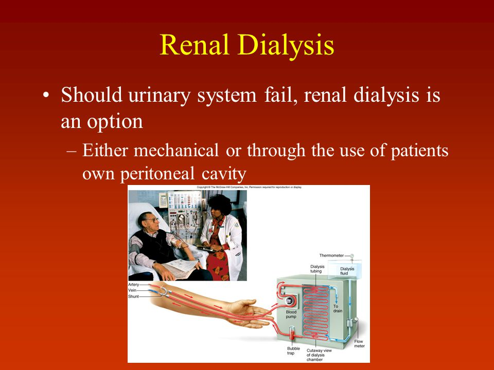 Renal Dialysis Should urinary system fail, renal dialysis is an option