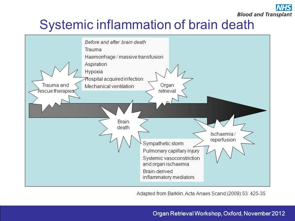 Systemic inflammation of brain death