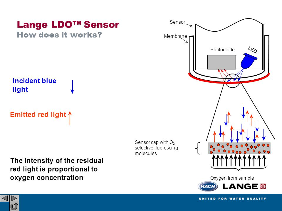 Lange LDO™ Sensor How does it works Incident blue light
