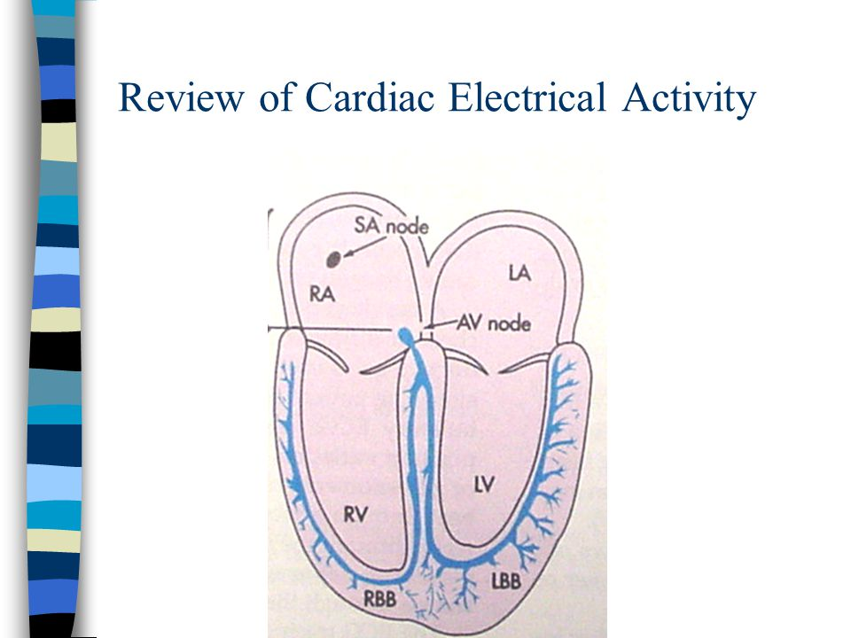 Review of Cardiac Electrical Activity