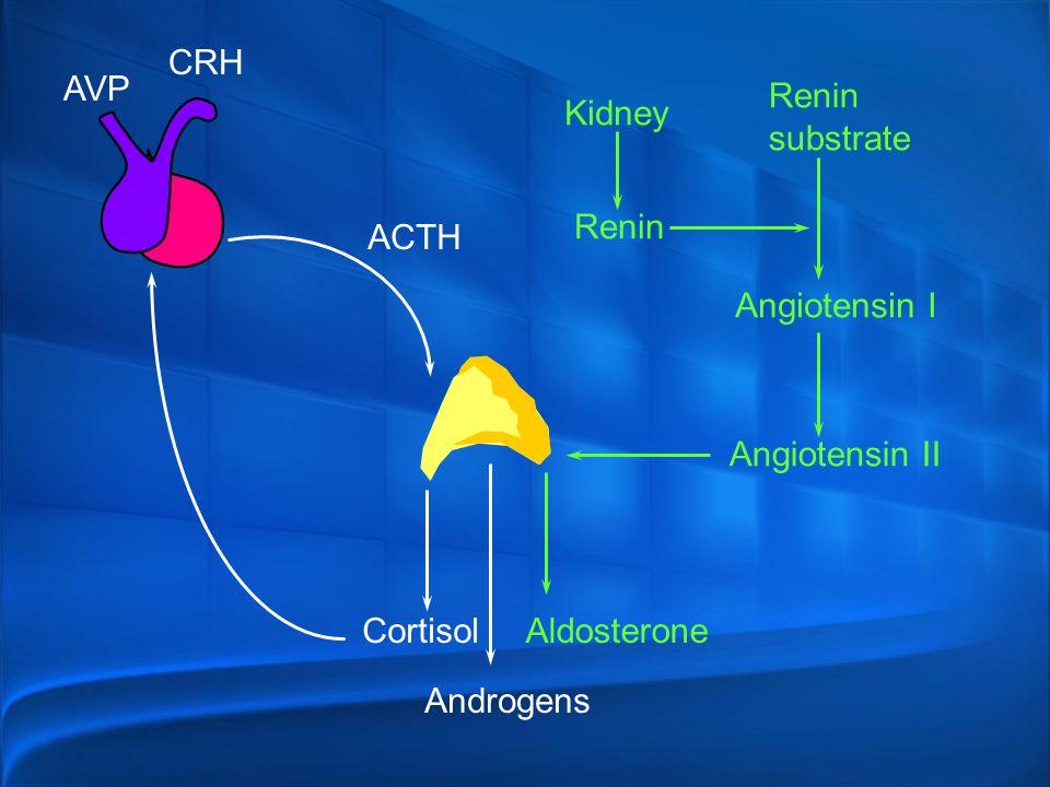 CRH AVP. Renin. substrate. Kidney. Renin. ACTH. Angiotensin I. Angiotensin II. Cortisol. Aldosterone.