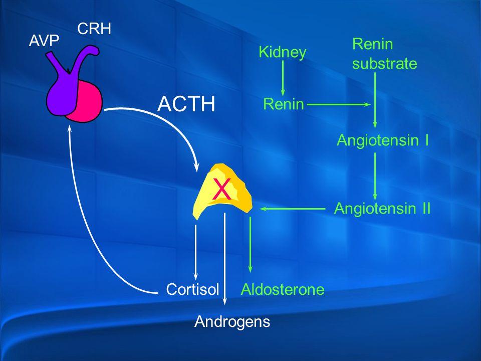X ACTH CRH AVP Renin substrate Kidney Renin Angiotensin I