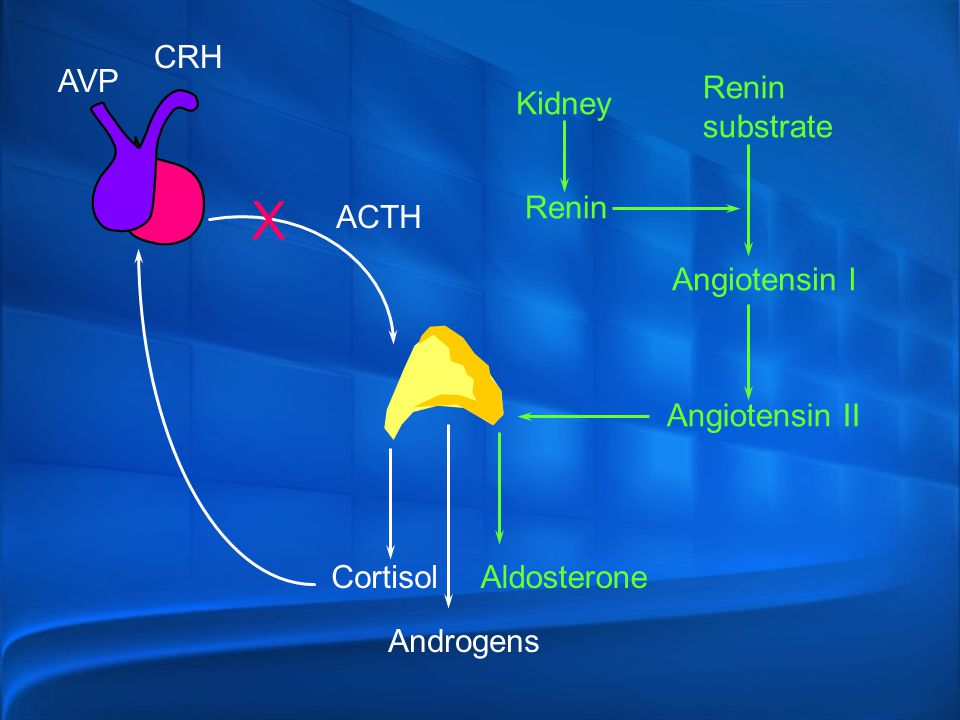 X CRH AVP Renin substrate Kidney Renin ACTH Angiotensin I