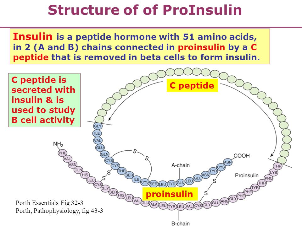 Structure of of ProInsulin