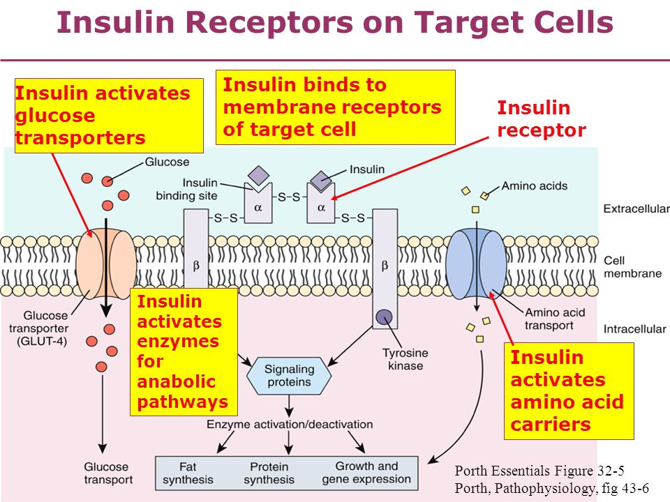 anabolic pathways cellular respiration
