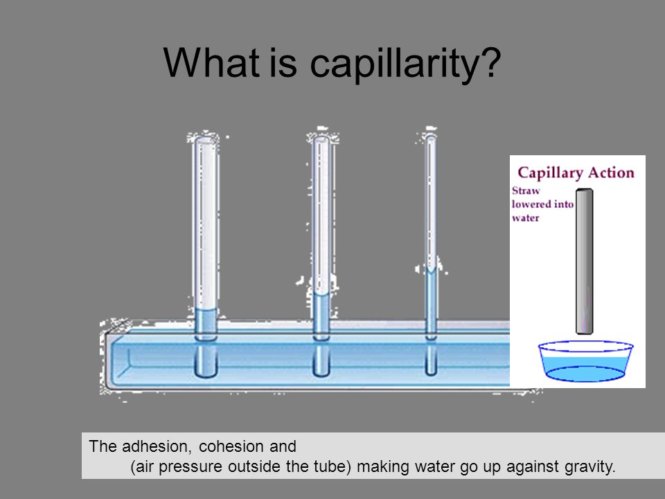 What is capillarity The adhesion, cohesion and