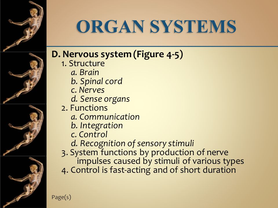 ORGAN SYSTEMS D. Nervous system (Figure 4-5) 1. Structure a. Brain