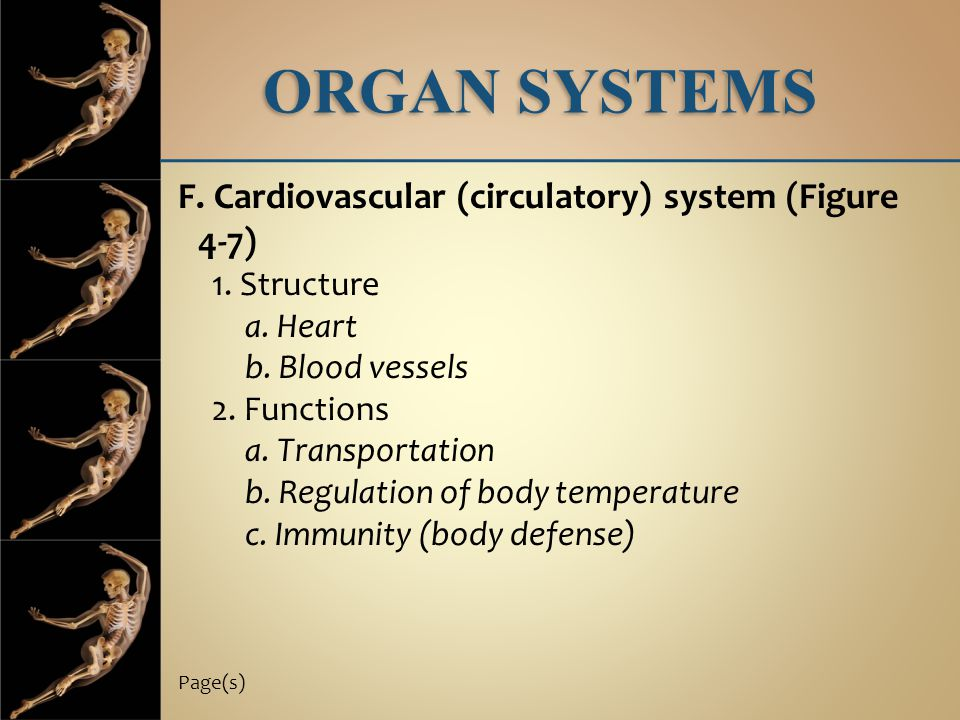 ORGAN SYSTEMS F. Cardiovascular (circulatory) system (Figure 4-7)