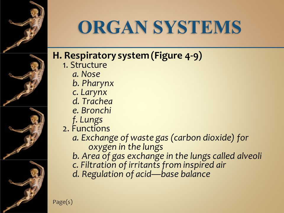 ORGAN SYSTEMS H. Respiratory system (Figure 4-9) 1. Structure a. Nose