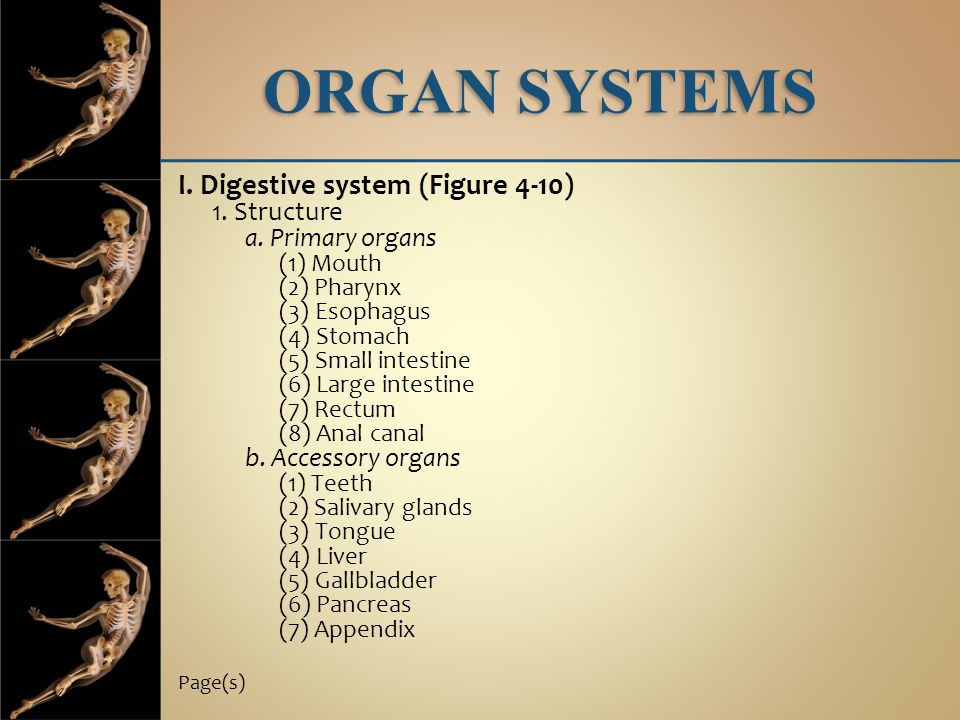 ORGAN SYSTEMS I. Digestive system (Figure 4-10) 1. Structure