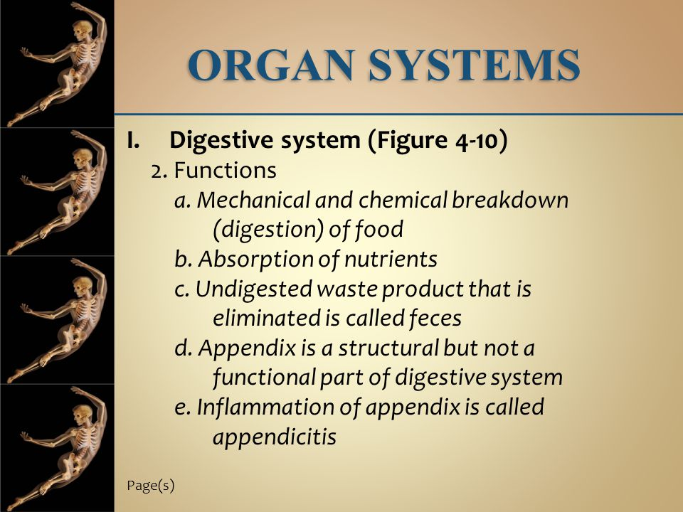 ORGAN SYSTEMS Digestive system (Figure 4-10) 2. Functions