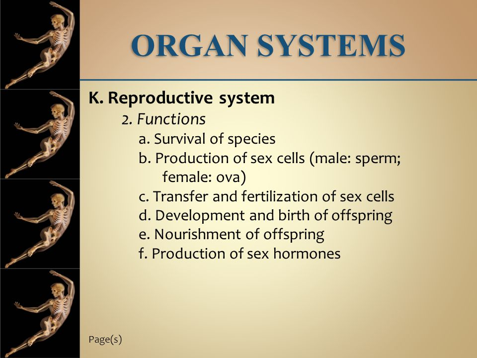 ORGAN SYSTEMS K. Reproductive system 2. Functions