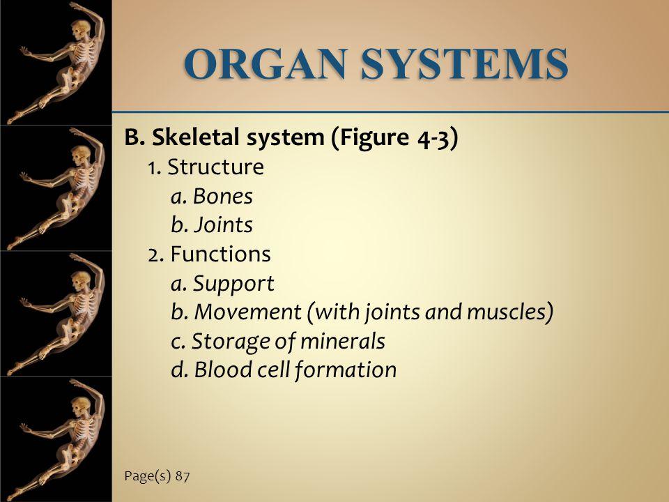 ORGAN SYSTEMS B. Skeletal system (Figure 4-3) 1. Structure a. Bones