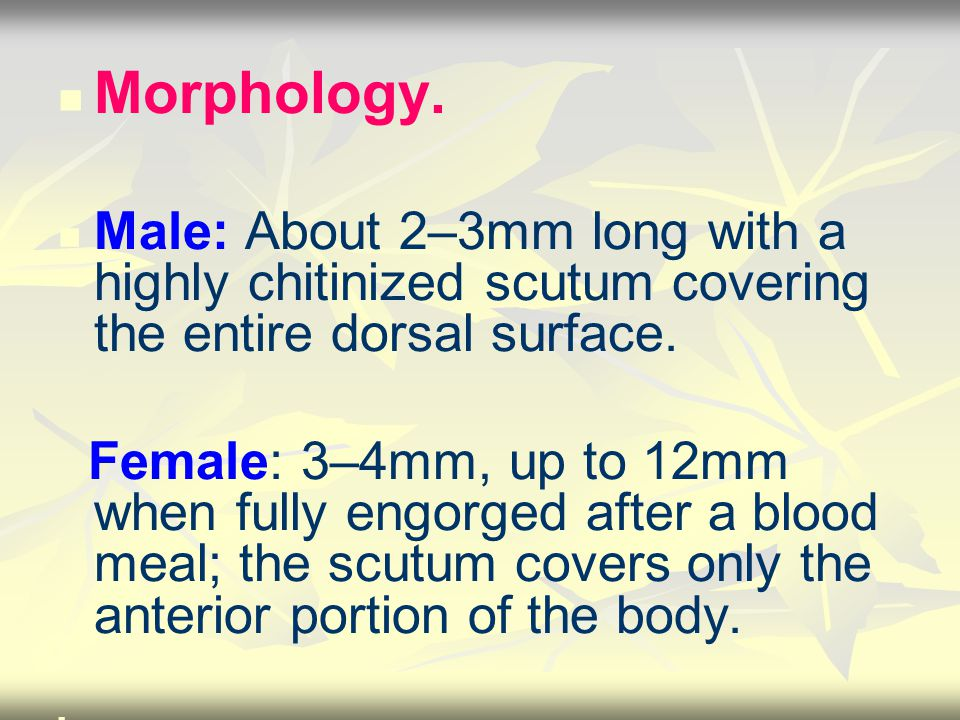 Morphology. Male: About 2–3mm long with a highly chitinized scutum covering the entire dorsal surface.