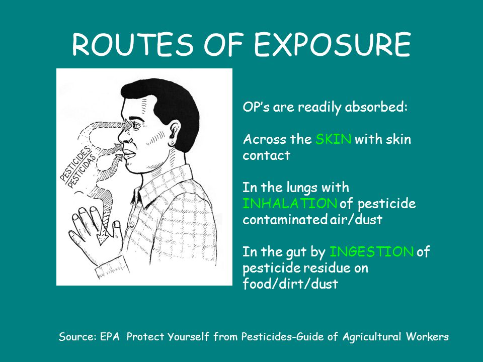 ROUTES OF EXPOSURE OP's are readily absorbed: