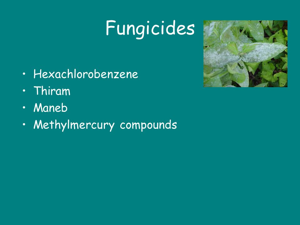 Fungicides Hexachlorobenzene Thiram Maneb Methylmercury compounds