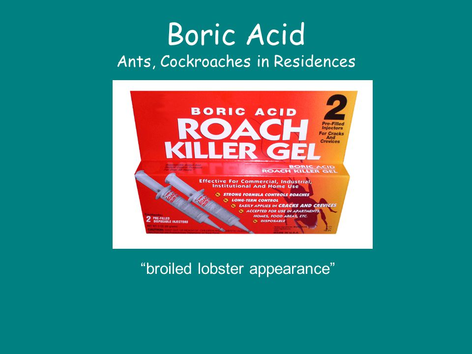 Boric Acid Ants, Cockroaches in Residences