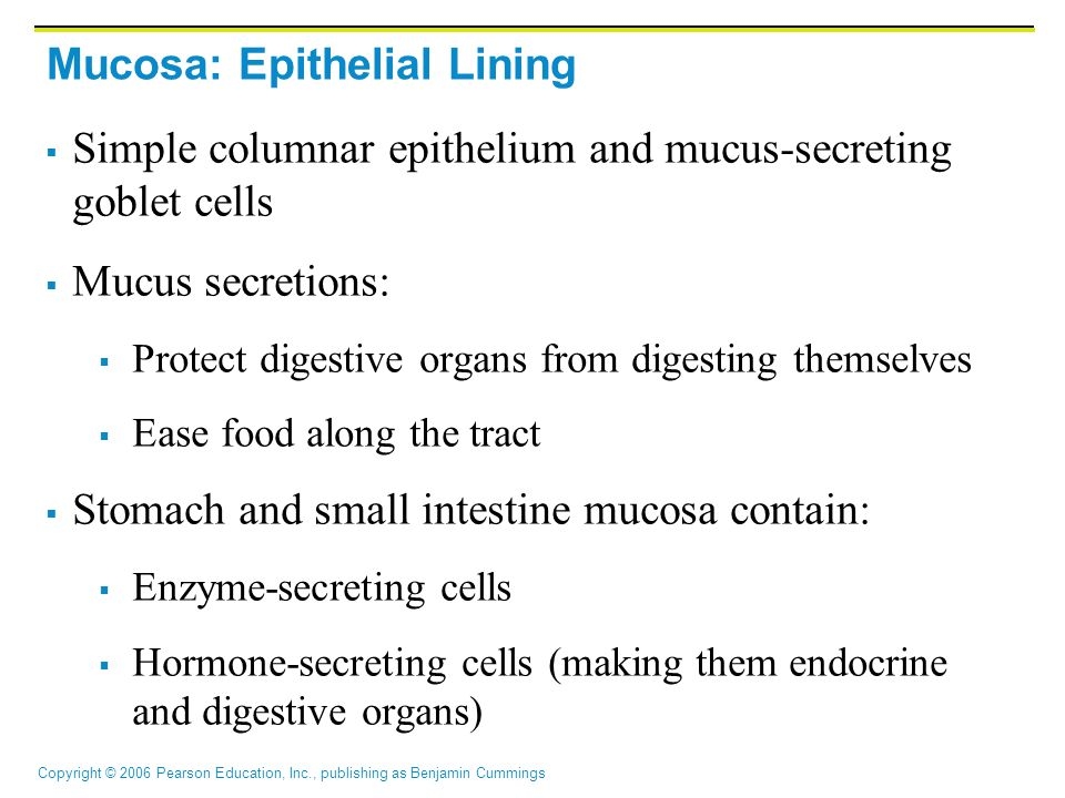 Mucosa: Epithelial Lining