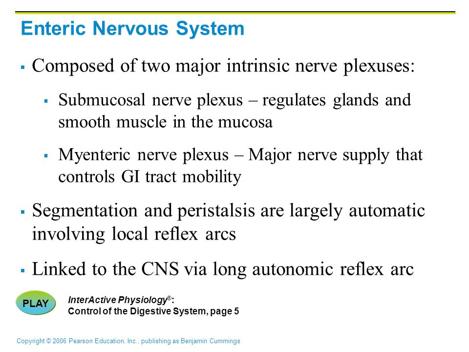 Enteric Nervous System