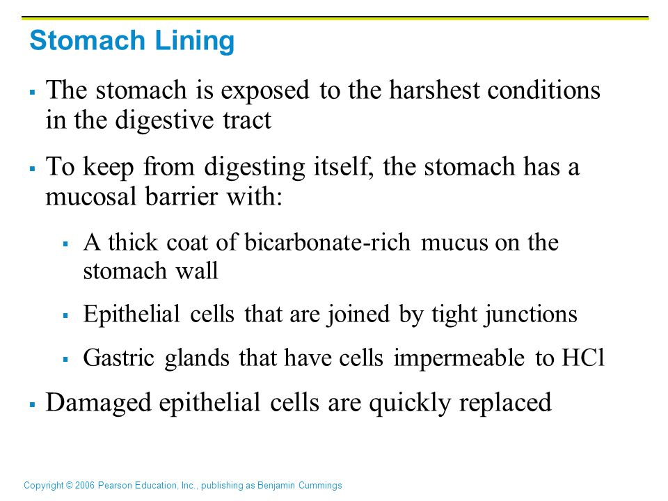 To keep from digesting itself, the stomach has a mucosal barrier with: