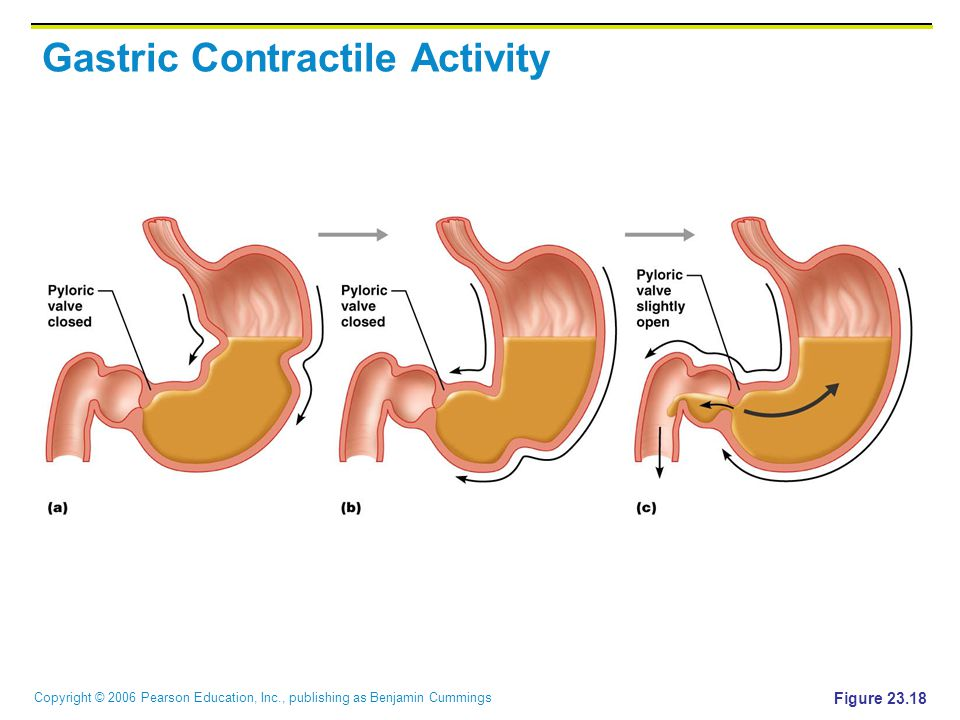Gastric Contractile Activity