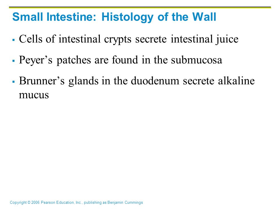 Small Intestine: Histology of the Wall