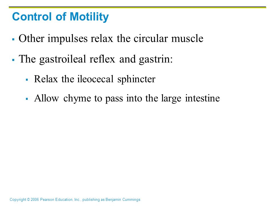 Other impulses relax the circular muscle